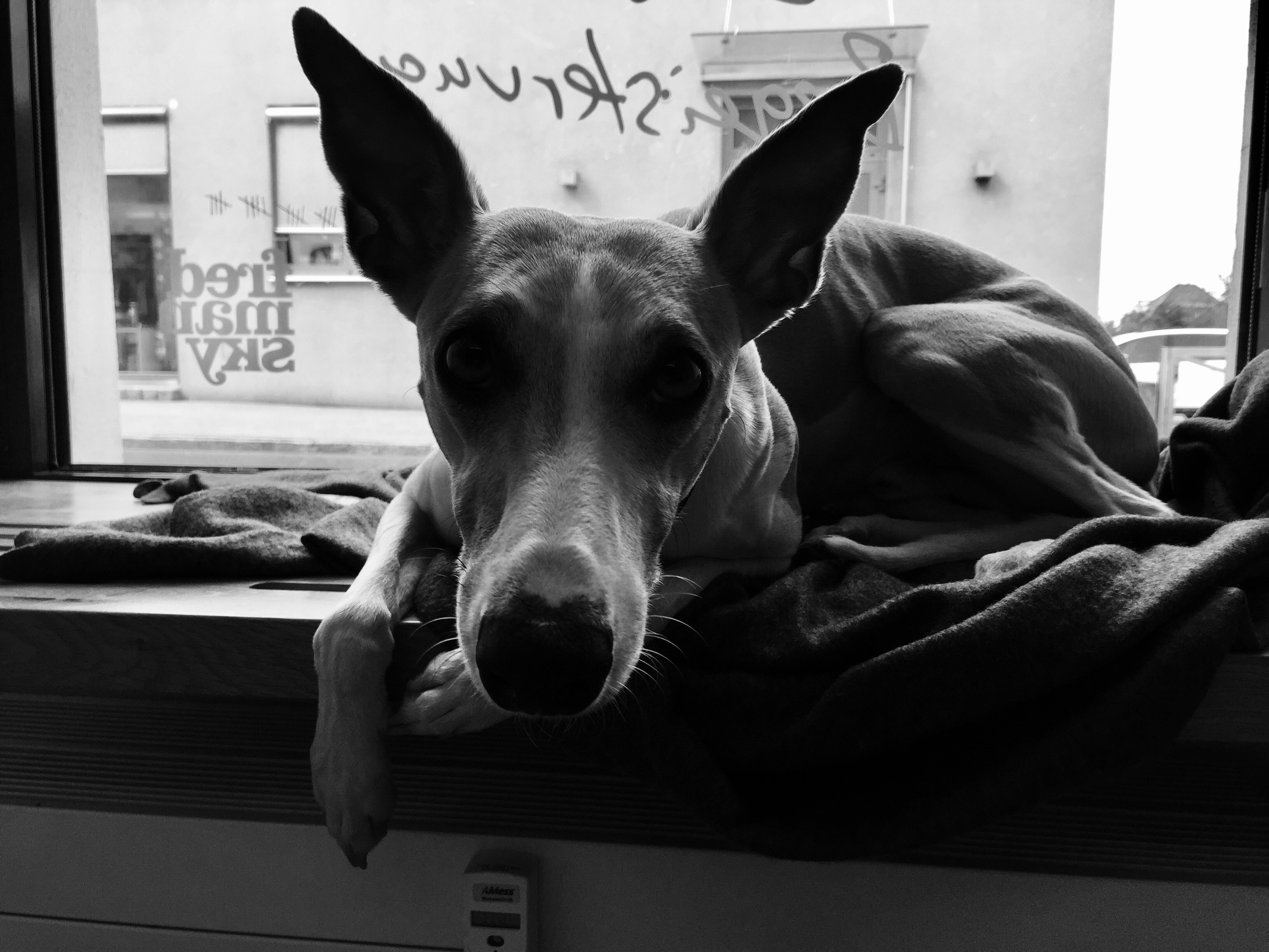 Frdmsk Gleisdorf Hund