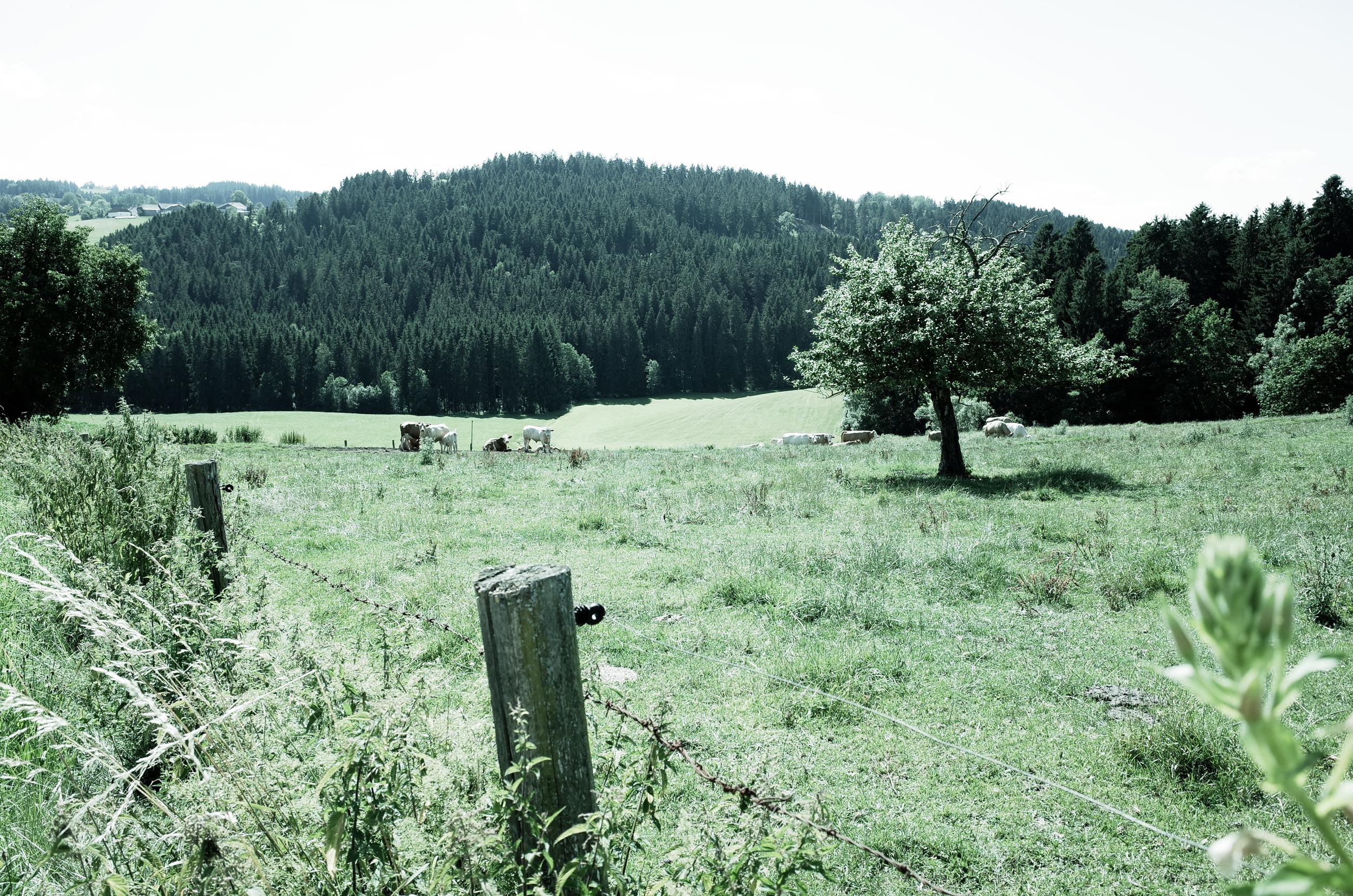 Granitpilgern Am Weg