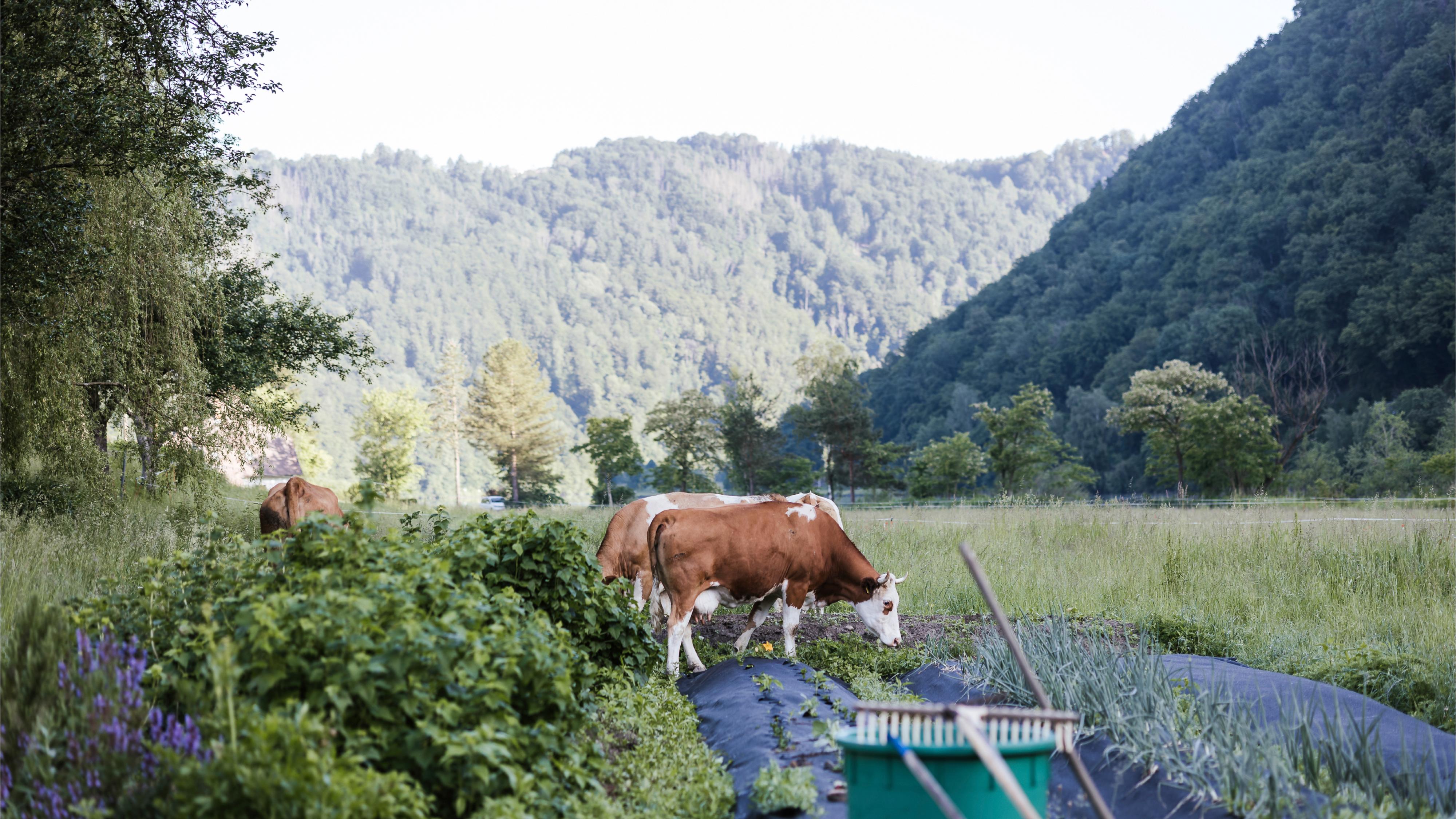 Ref Faehrfrau Website 11 Landwirtschaft