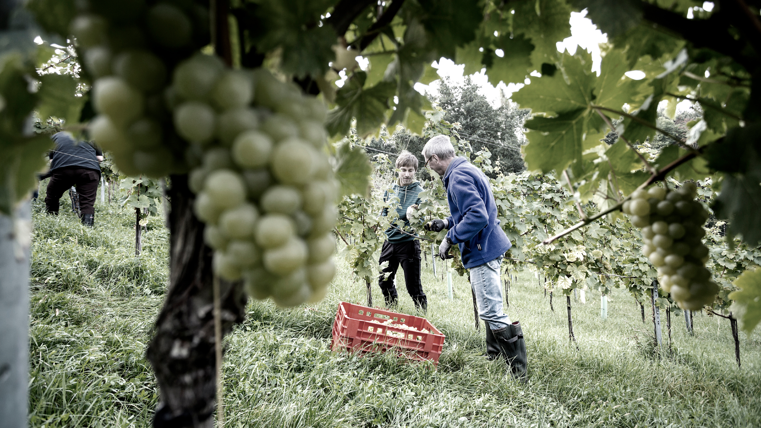 Ref Goedwinemakers Fotografie 4