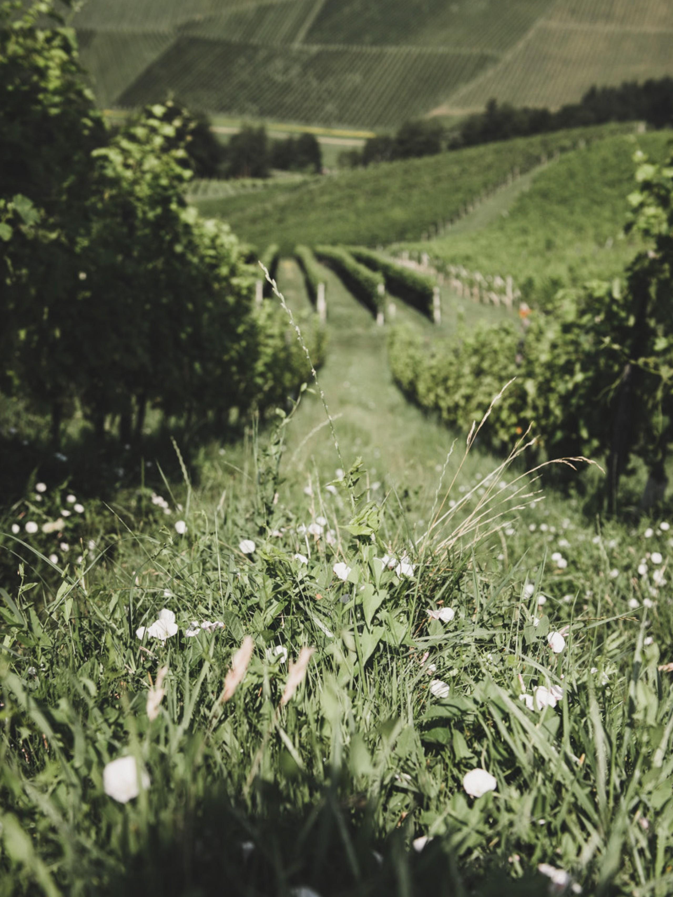 Ref Lackner Tinnacher 06 Fotografie