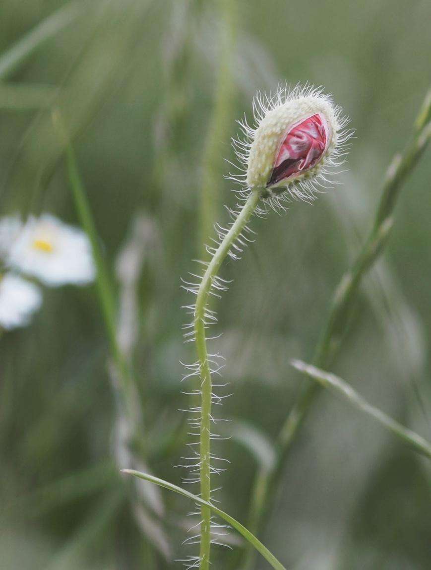 OÖ Landesgartenschau Blumen