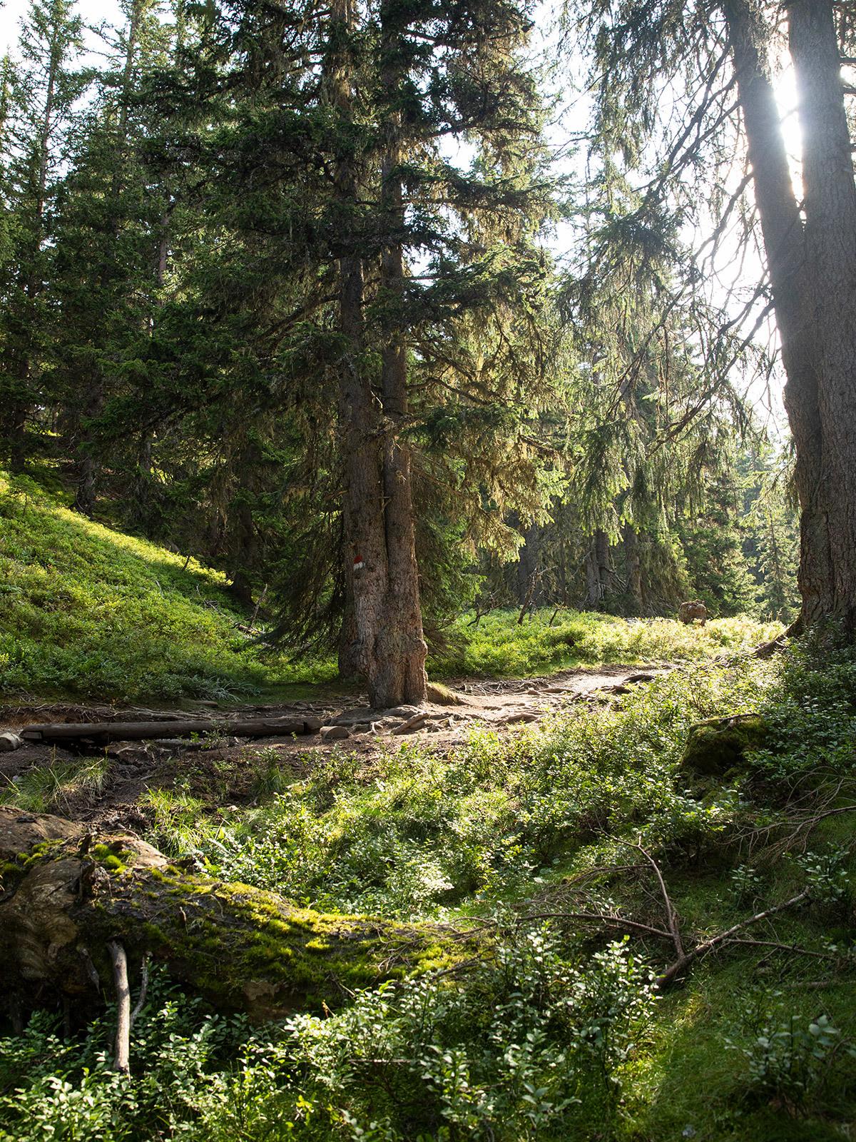 Ref Sltg 1910 1200X1600 Wald