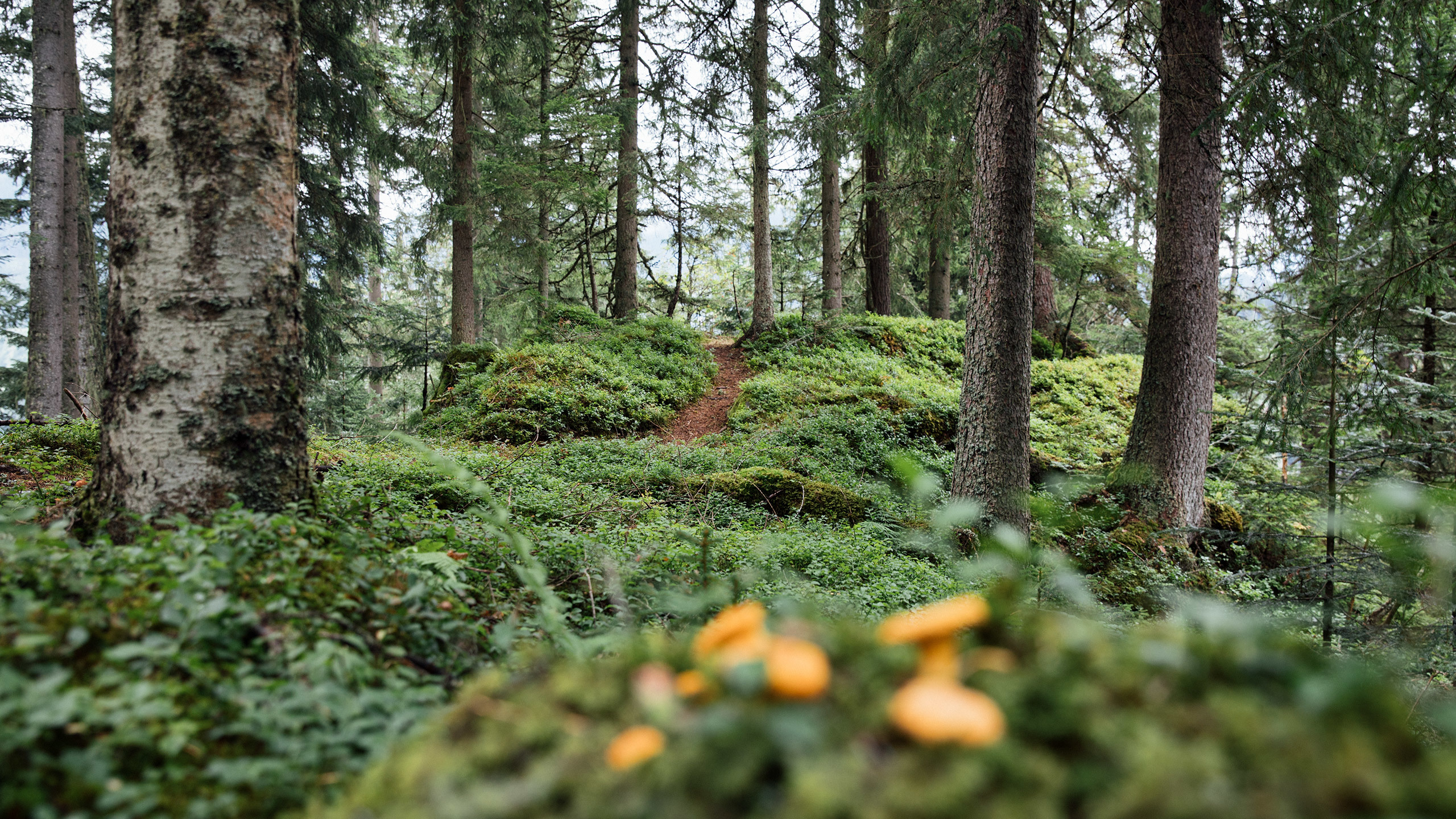 Ref Sltg 1910 2560X1440 Wald